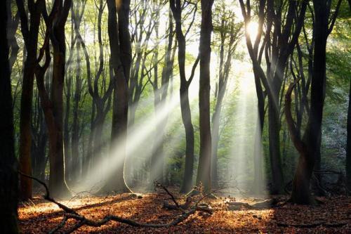丛林里一束光微信图像