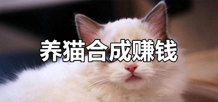 养猫合成赚钱